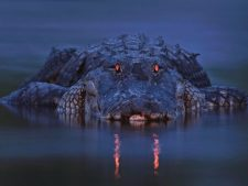 Alligator Background Download Free