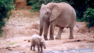 Cute Baby Elephant Images For All To Enjoy