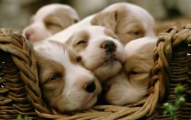 Cute Puppy Backgrounds Download Free