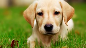 Cute Puppy HD Images