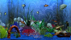 Aquarium HD Wallpapers