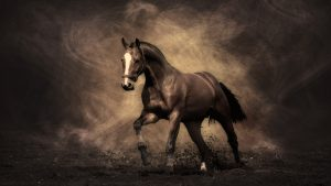 High Resolution Arabian Horse Desktop Wallpaper