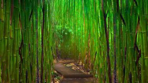 Download Free Bamboo Forest Background