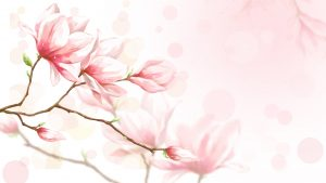 Feminine and Flower Wallpapers in Beautiful Colours