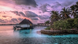 Exotic Backgrounds Download