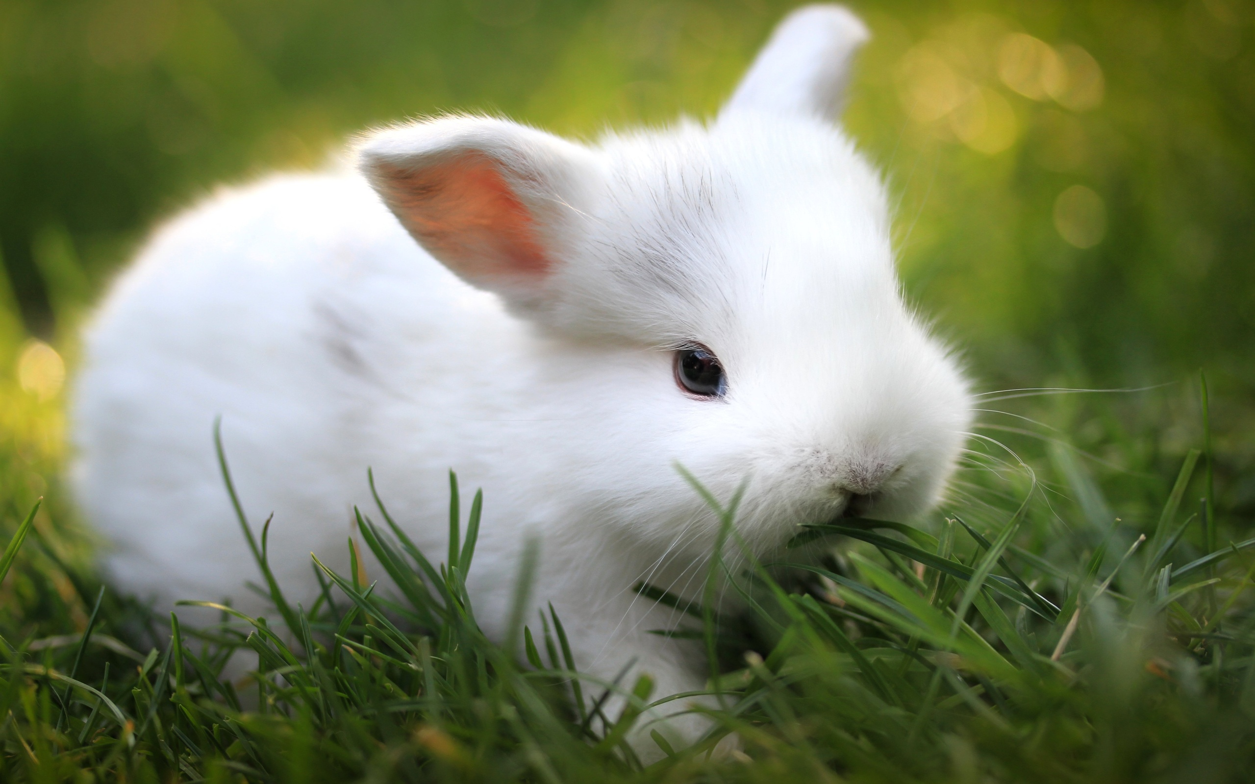 wallpaper.wiki-Free-adorable-rabbit-wallpaper-PIC-WPC003835