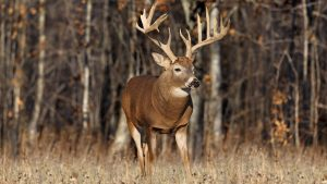 Deer Hunting Collection of Background Images Available As Free Downloads