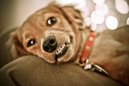 Free Download Funny Dog Backgrounds