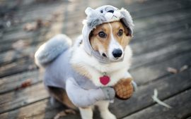Funny Dog Wallpapers HD