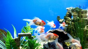 Fish Tank Bright And Colourful Screen Backgrounds Download