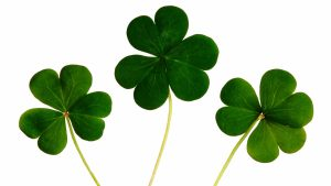 Free Download Four Leaf Clover Wallpapers HD