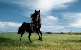 Equestrian Wallpapers HD