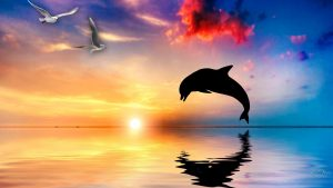 Dolphin Aquatic Mammals Wallpaper Collection