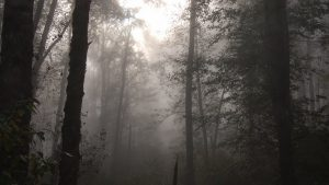 Foggy Forest Spooky Wallpapers in High Definition