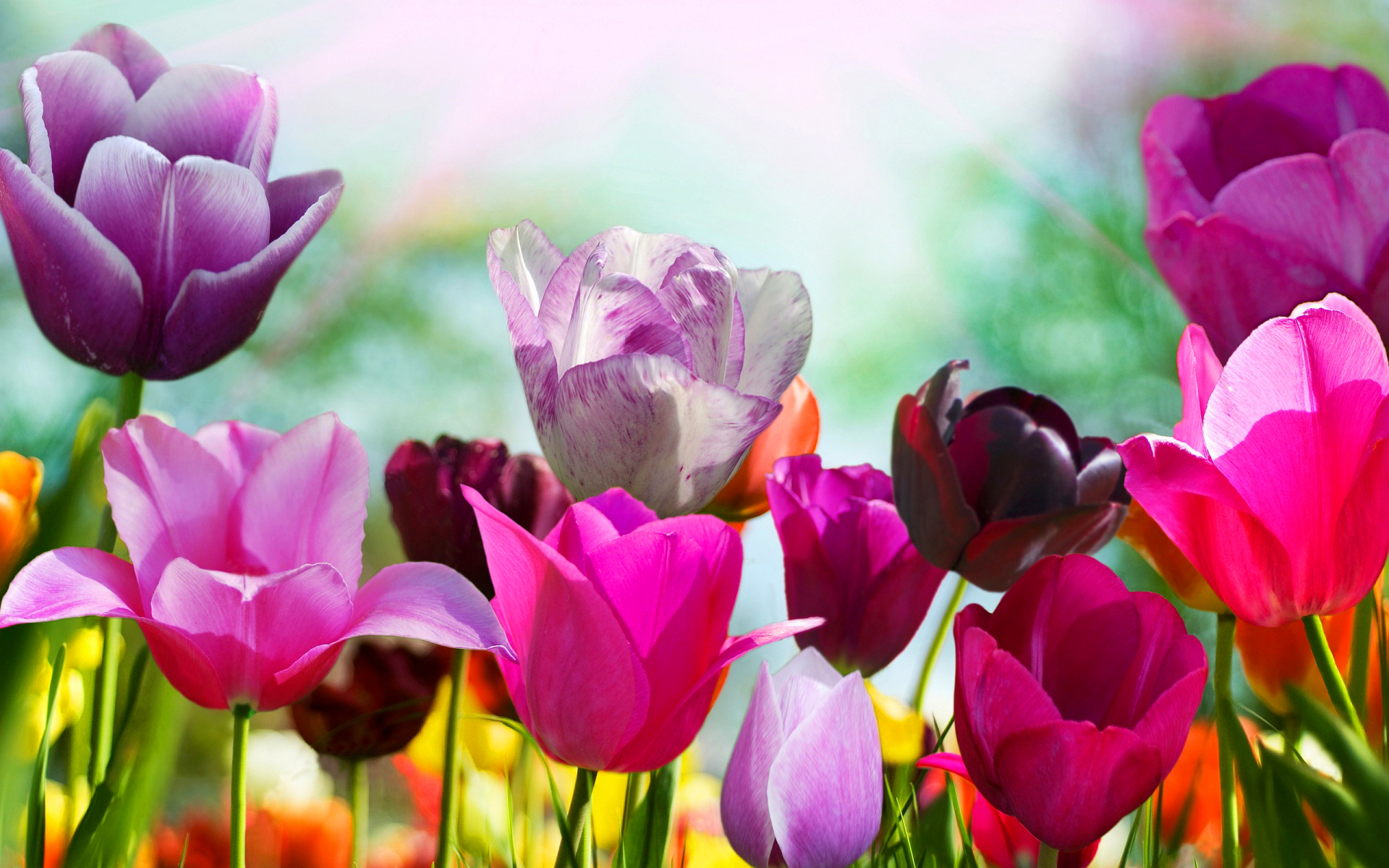 Wallpaper hd spring flowers images pic wpb00410 wallpaper download mightylinksfo