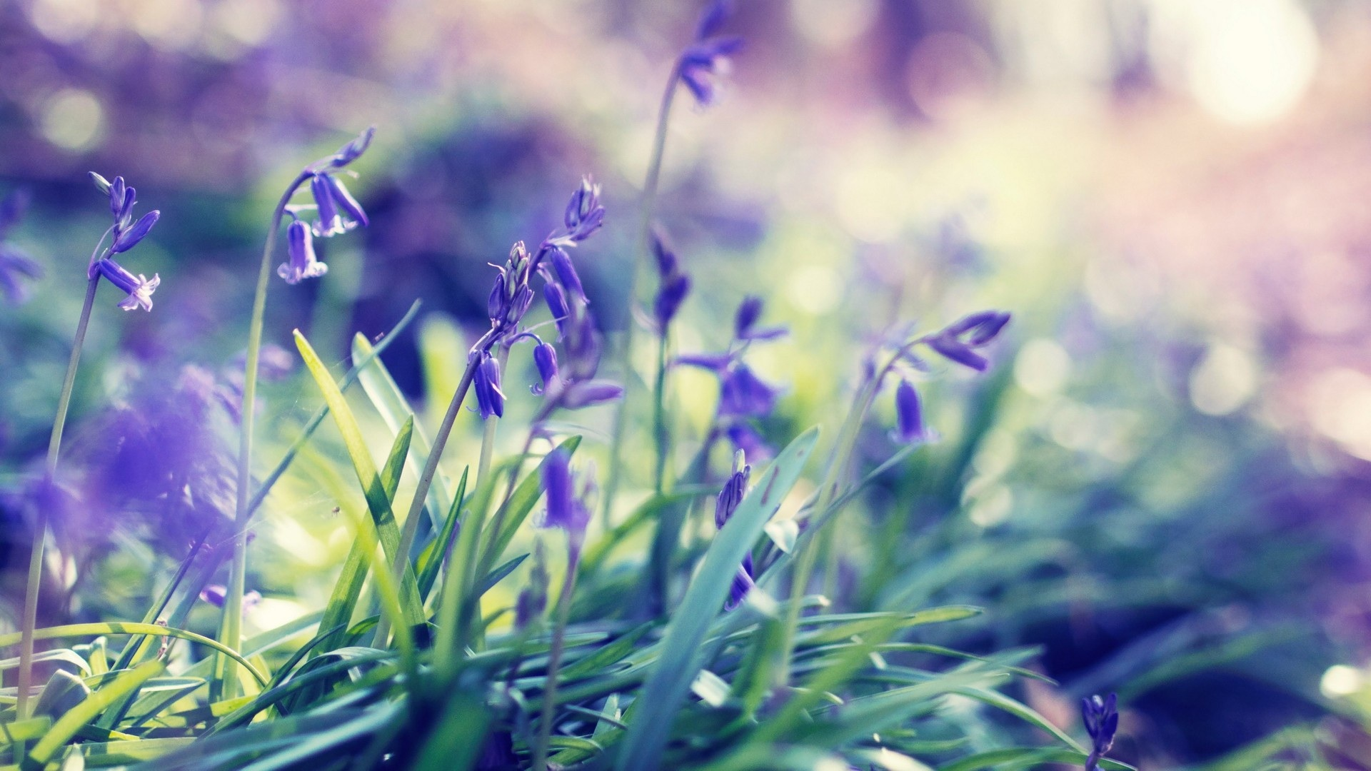 Wallpaper hd spring flowers picture pic wpb00412 wallpaper download mightylinksfo