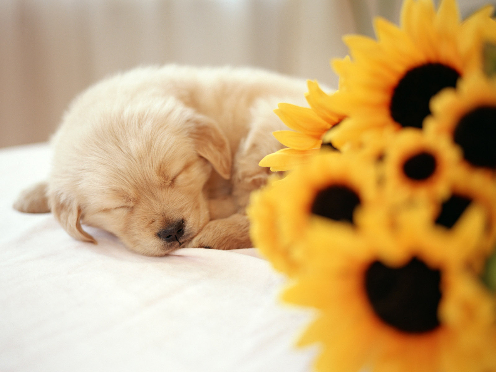 Free Download Cute Puppy Wallpapers