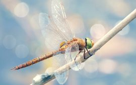 Dragonfly Insect Brightly Coloured Wallpaper Photos in Excellent High Definition