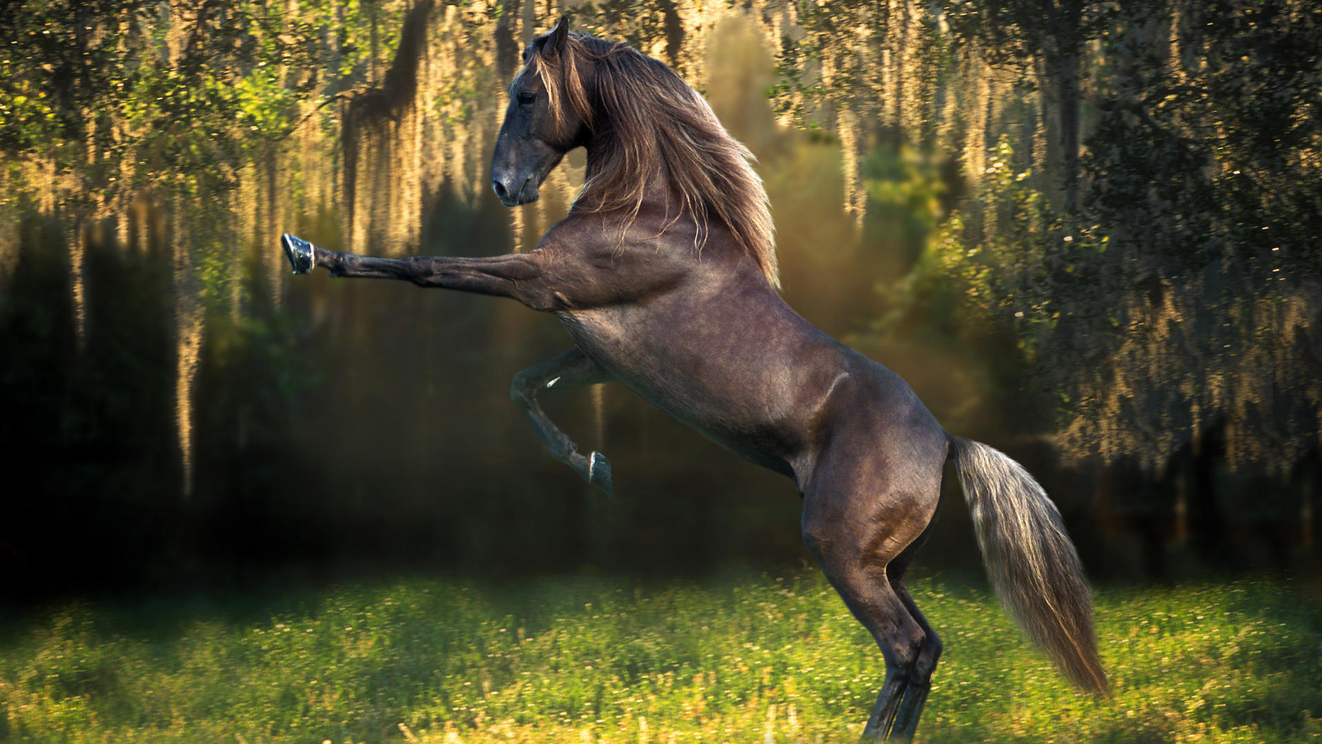 Wallpaper horse pictures pic wpc002518 wallpaper download voltagebd Images
