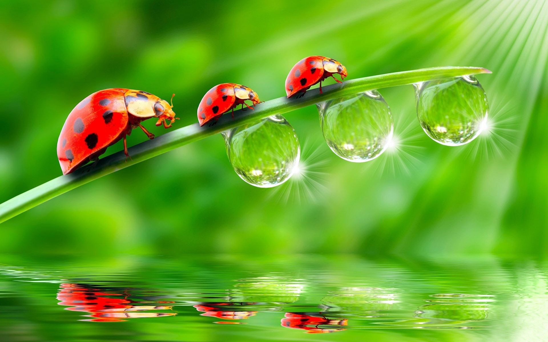 ladybird leaf water drop backgrounds pic wpd0011901