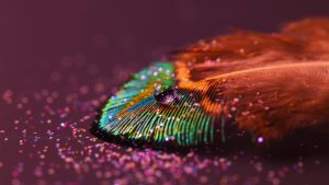 Feathers from Birds Photo Close Ups and Pictures as Wallpapers HD