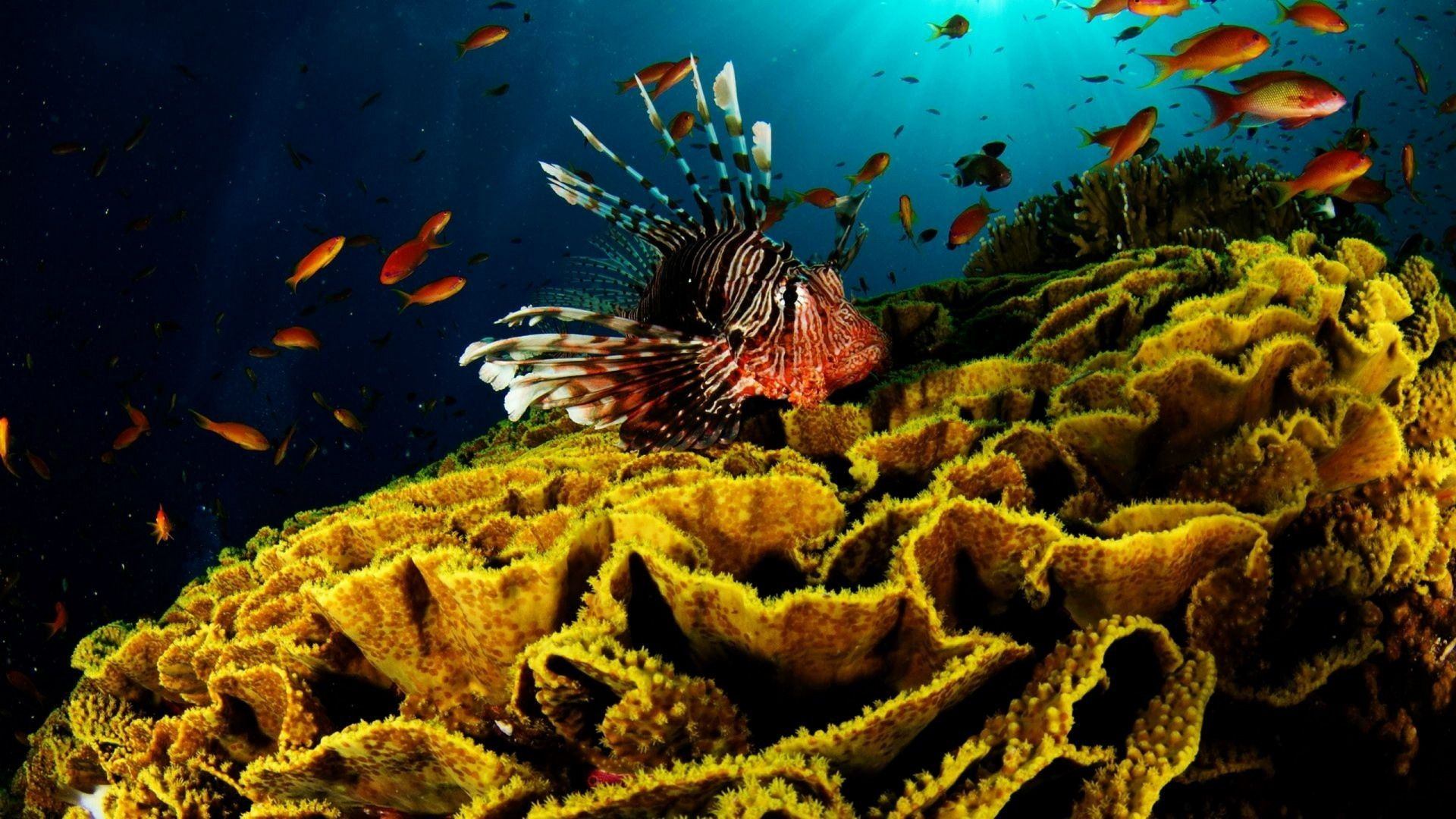 wallpaper.wiki-Photos-coral-reef-fish-download-PIC-WPD009839