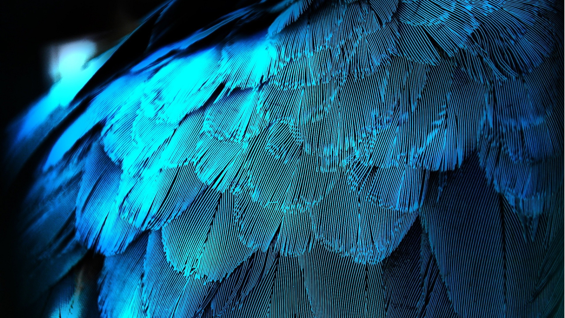 wallpaper.wiki-Pictures-blue-feather-1920x1080-PIC-WPB003119