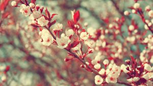 Flower Images Tumblr Free Download
