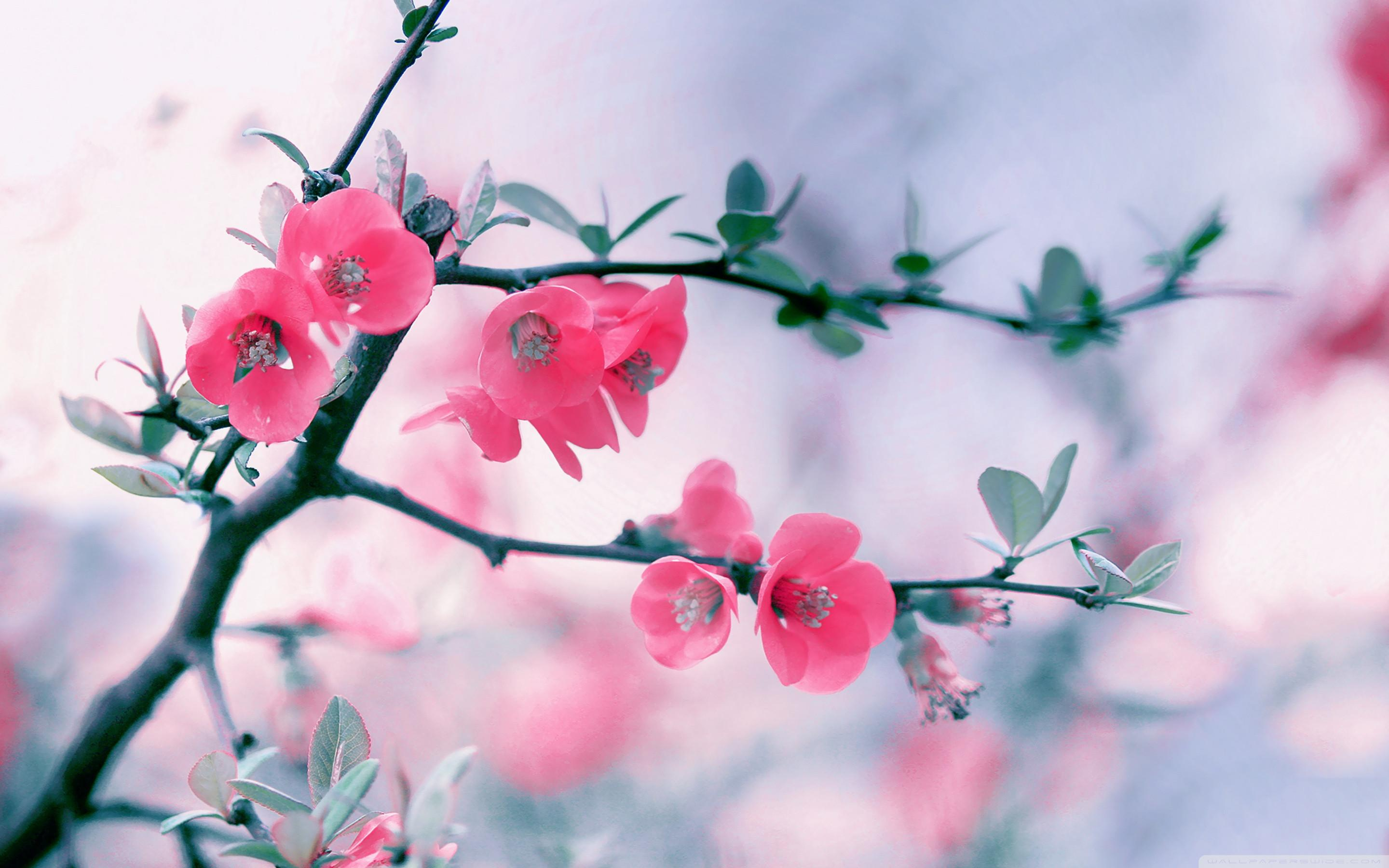 Wallpaper spring flowers desktop image pic wpb00462 wallpaper download mightylinksfo