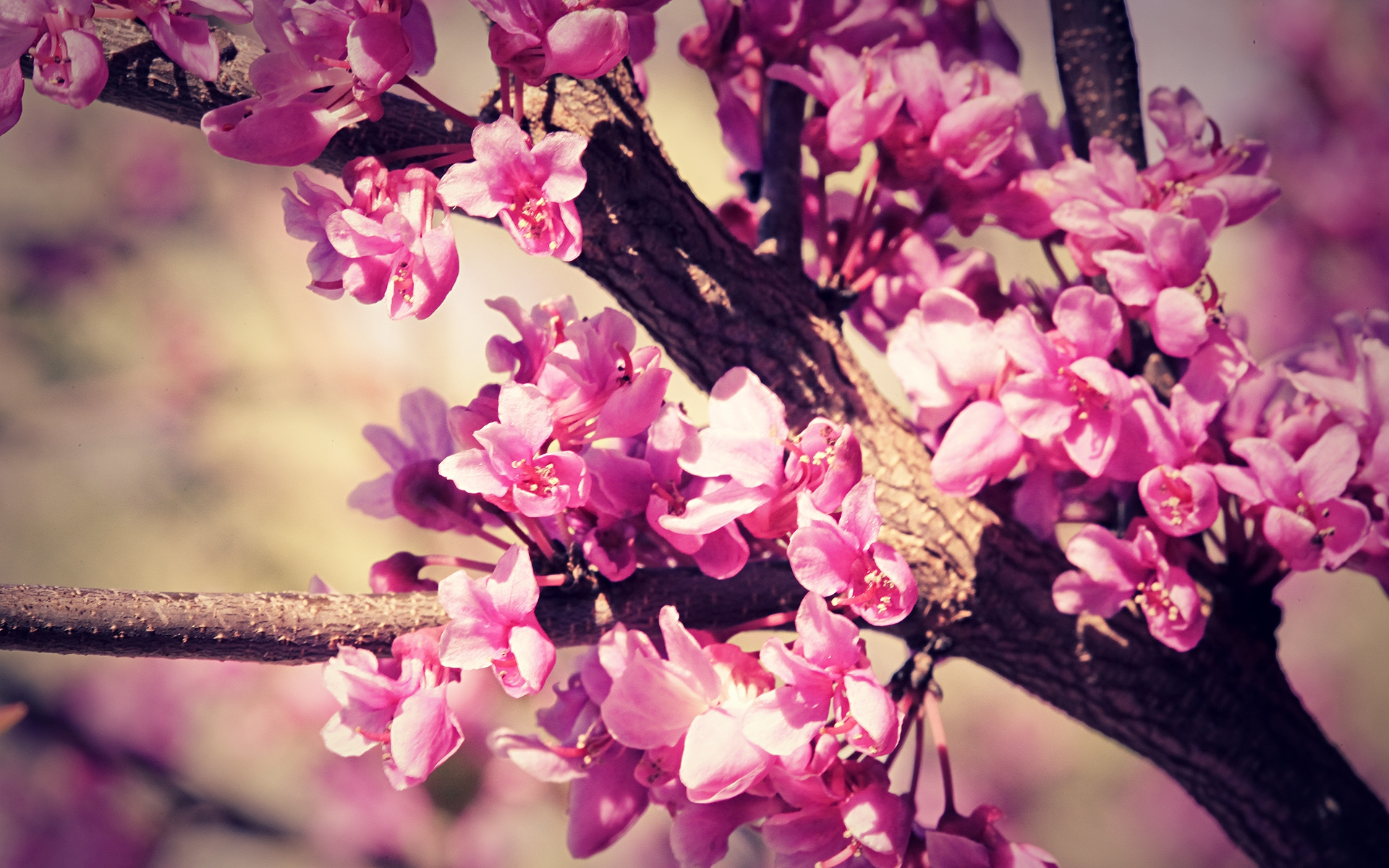 Spring flowers wallpapers hd 60 wallpaper mightylinksfo