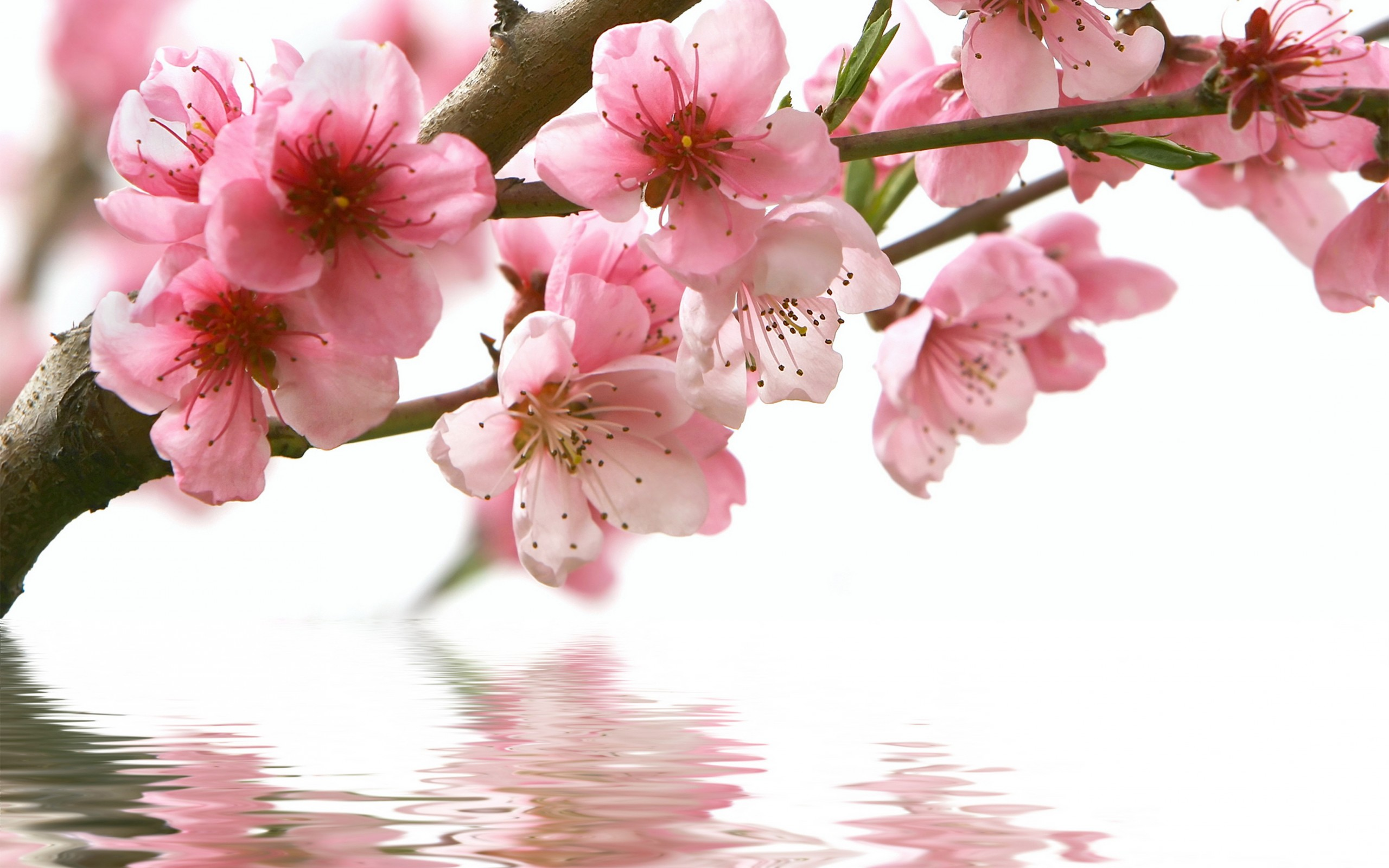 Wallpaper spring flowers hd photo pic wpb00433 wallpaper download mightylinksfo
