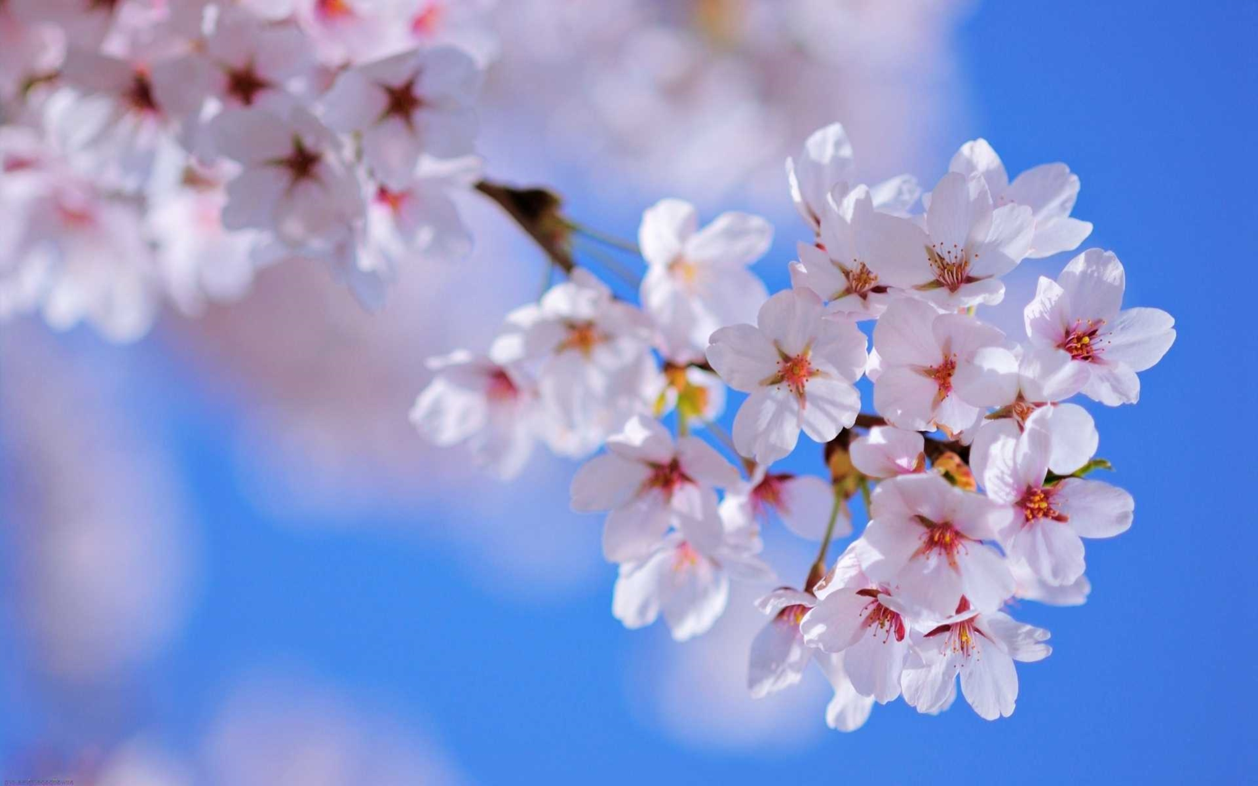 Wallpaper spring flowers image hd pic wpb00471 wallpaper download mightylinksfo