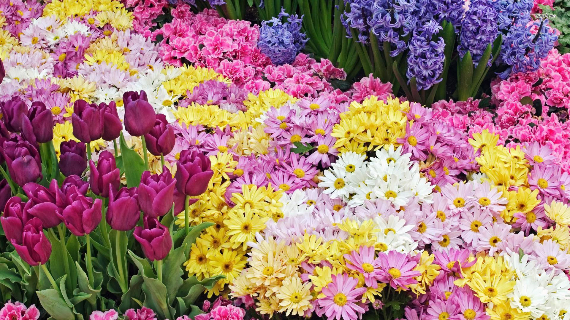 Wallpaper spring flowers pictures pic wpb00482 wallpaper download mightylinksfo