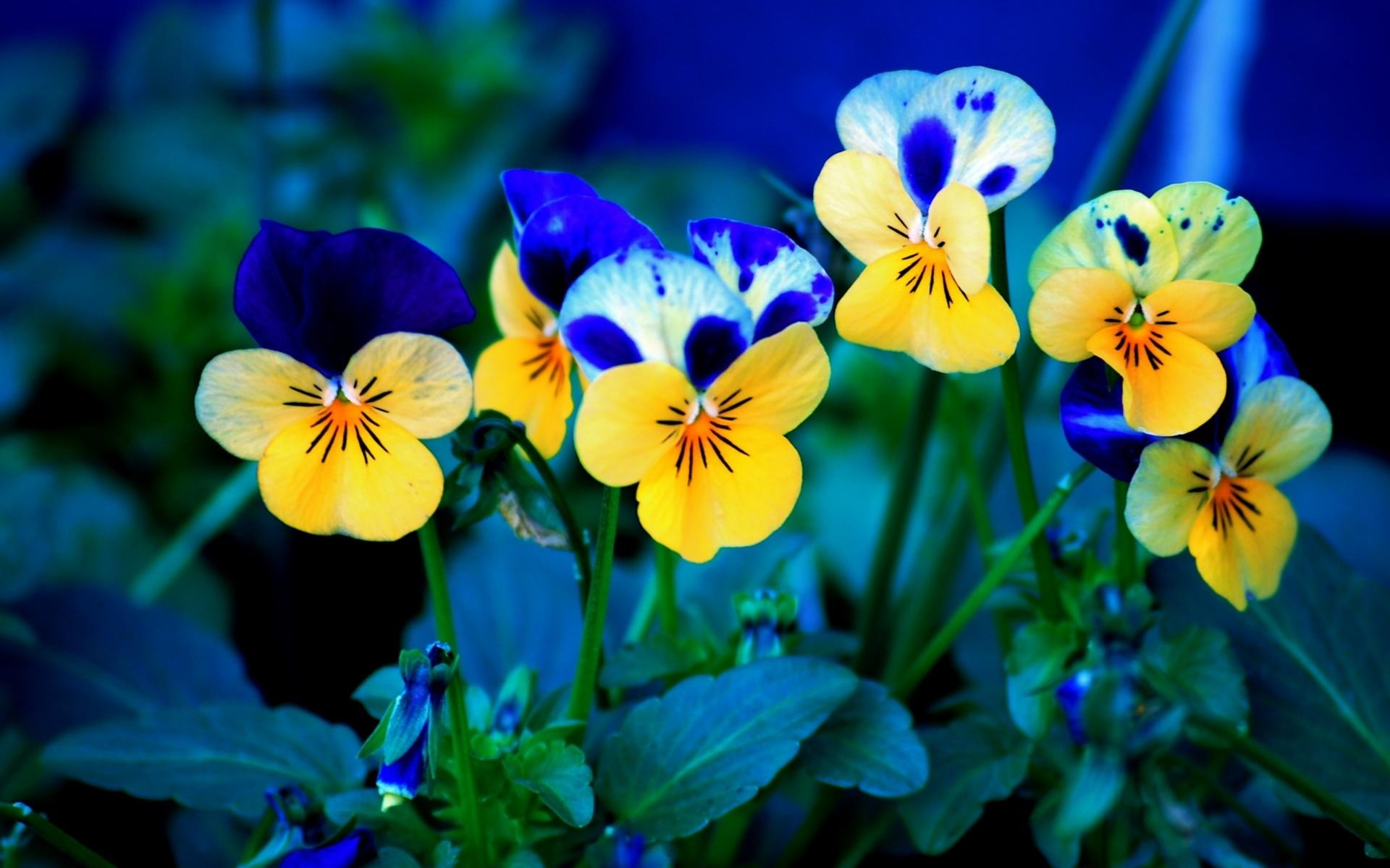 Wallpaper spring flowers wallpaper download free pic wpb00443 download mightylinksfo