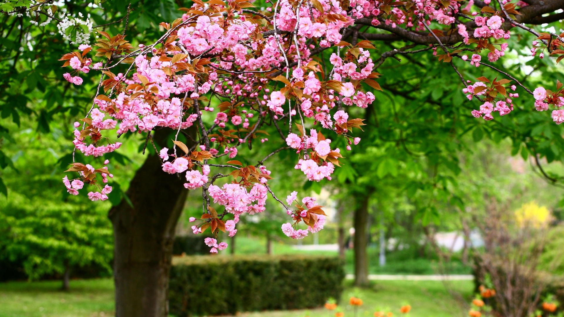 wallpaperwiki spring hd desktop wallpaper download pic