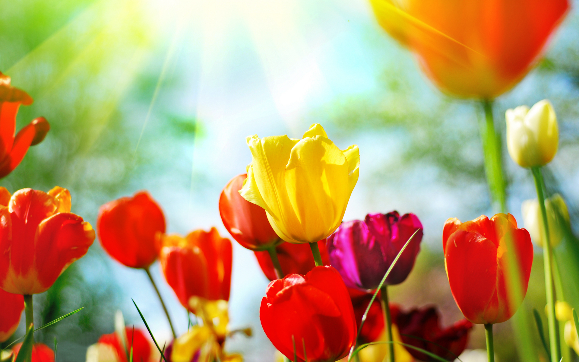 Wallpaper spring flowers desktop background free download pic download mightylinksfo