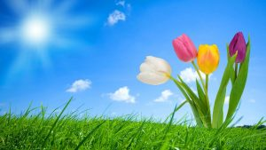 Spring wallpapers HD free download (60+)