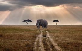 Download Free Wildlife Wallpapers