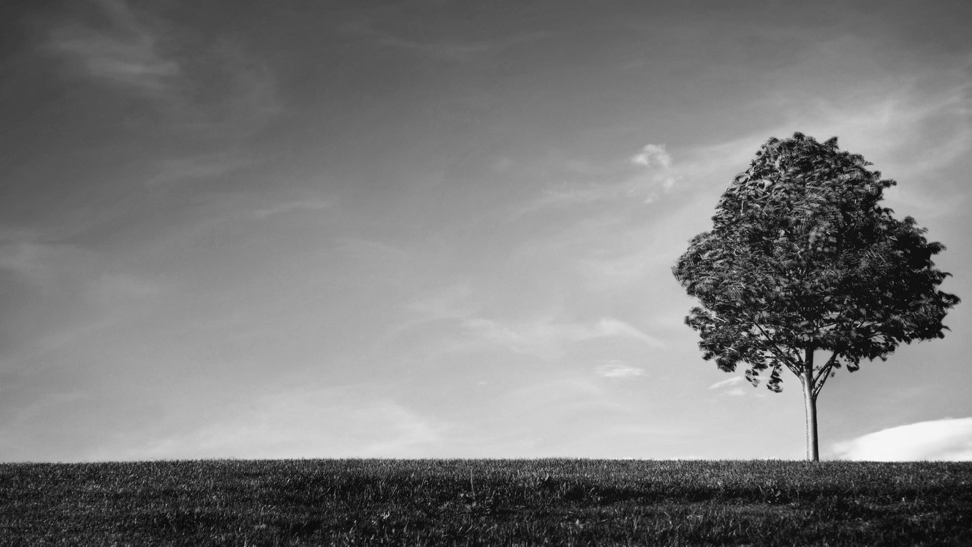 Black And White Tree Wallpaper Hd Wallpaperwiki