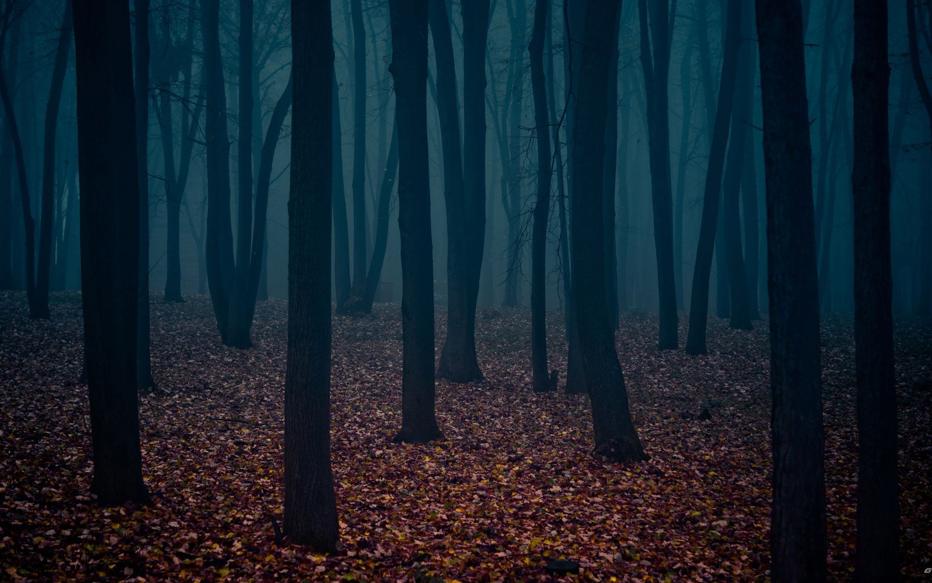 dark woods desktop background