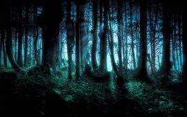 HD Dark Woods Bacgrounds Free Download