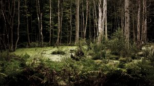 Free HD Dark Woods Wallpapers Download