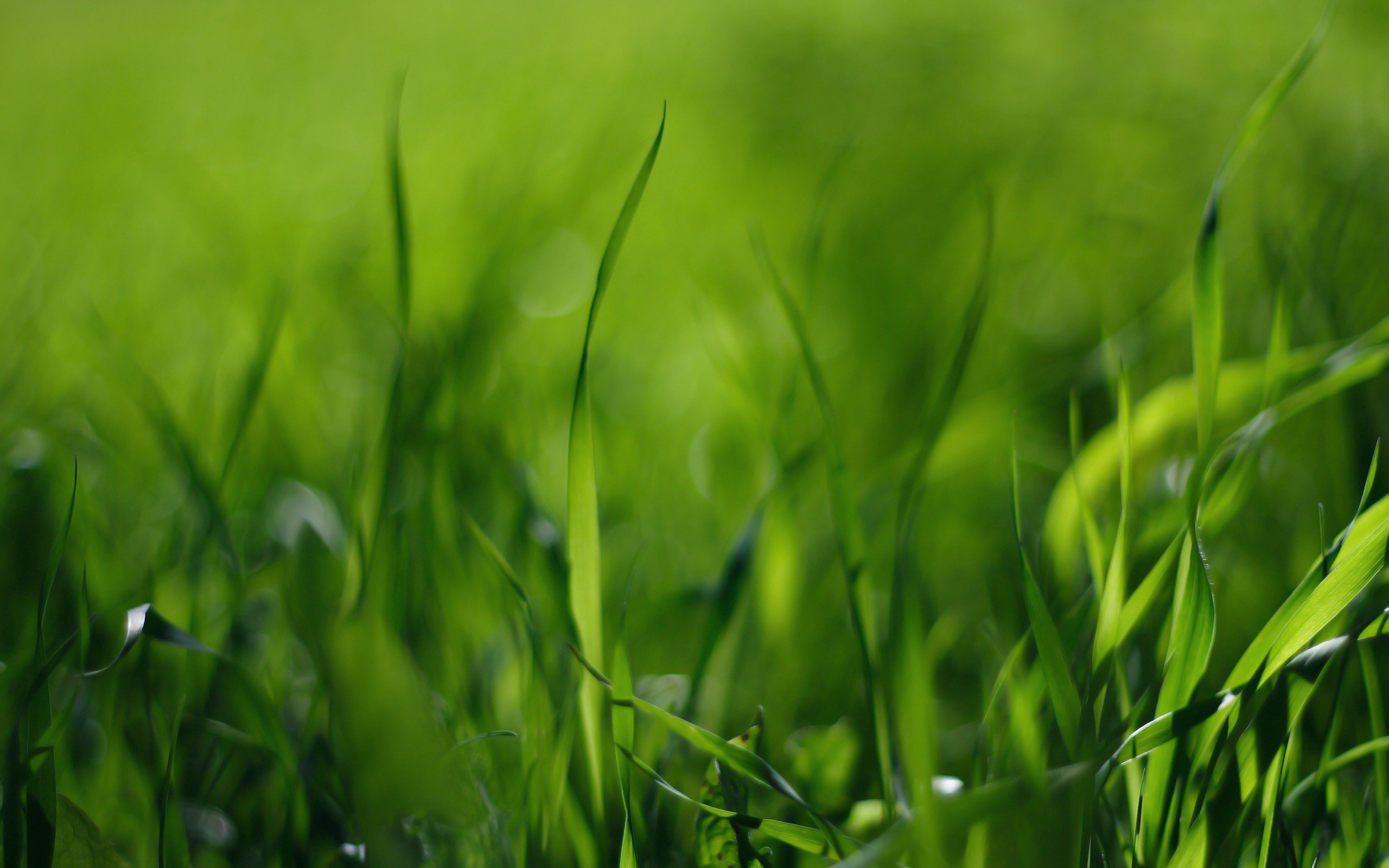 desktop-grass-hd-wallpapers-download | wallpaper.wiki