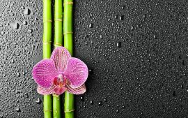 Bamboo Backgrounds Free Download