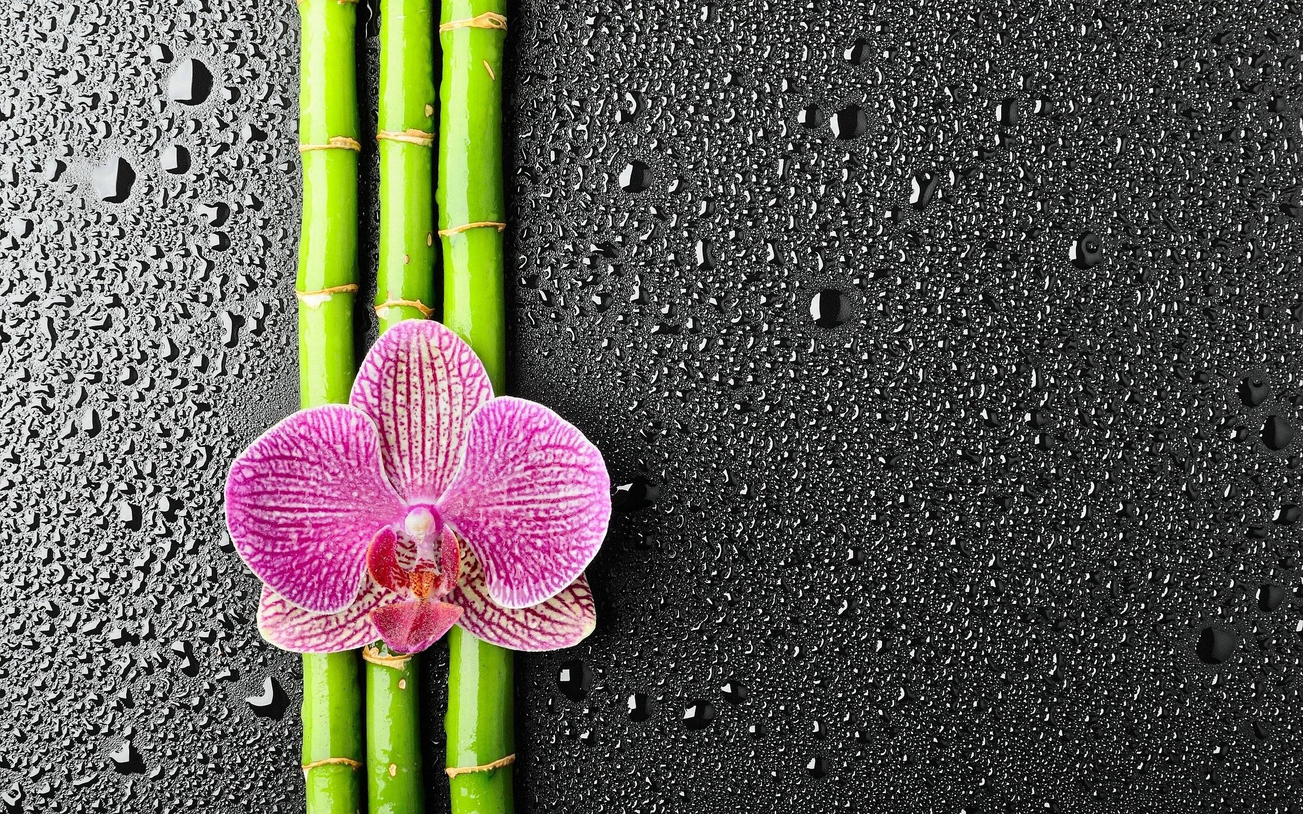 Bamboo Backgrounds Free Download Wallpaper Wiki