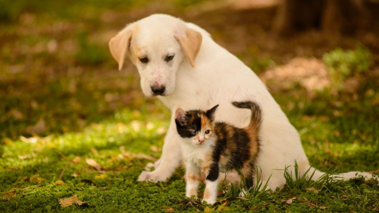 Cute Dog And Cat Wallpaper By Billion Photos