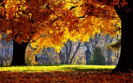 Fall Scenery HD Backgrounds