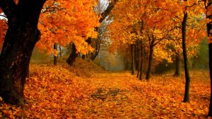 Fall Scenery Wallpapers Free Download