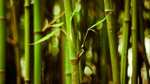 Desktop Bamboo HD Wallpapers