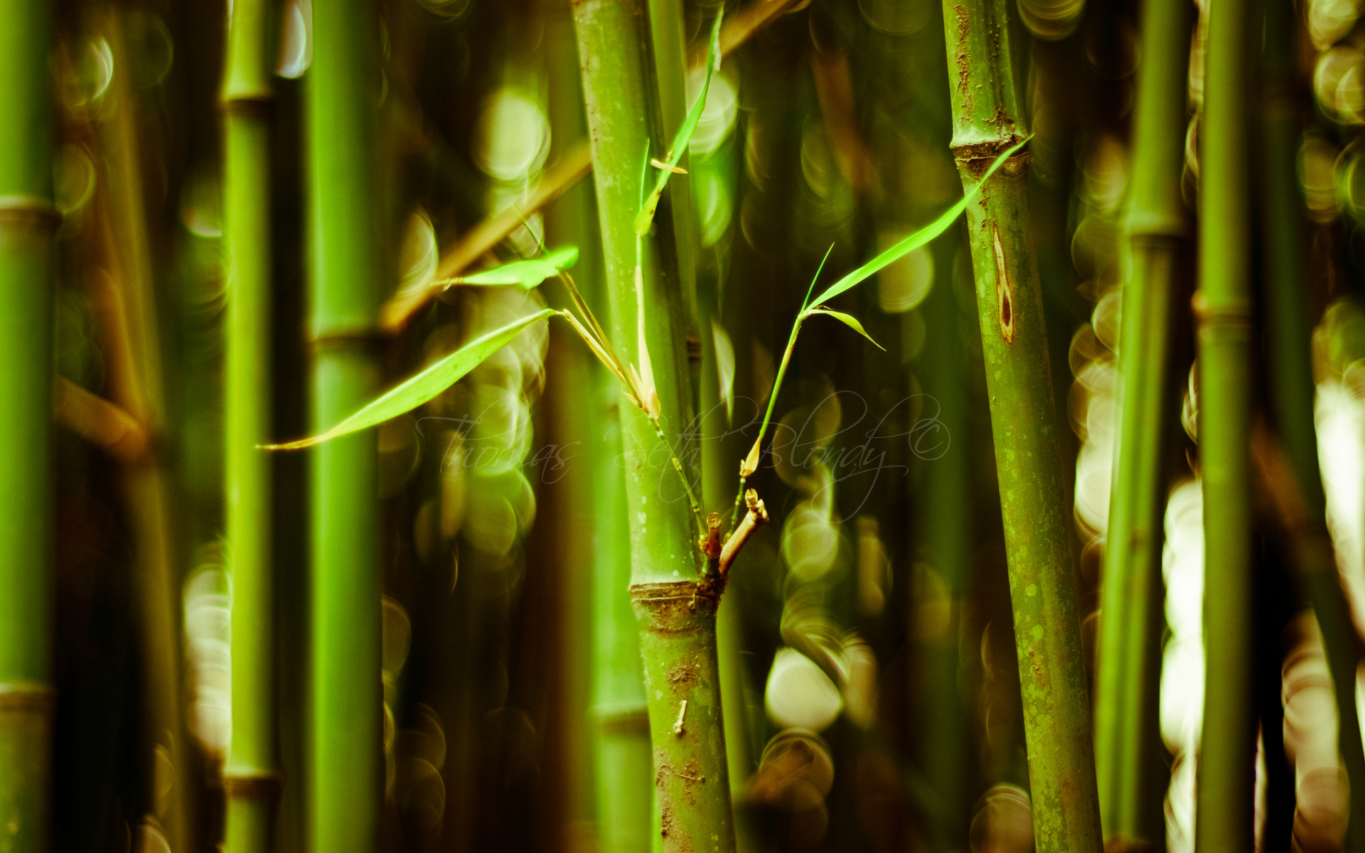 Desktop Bamboo Hd Wallpapers Wallpaper Wiki